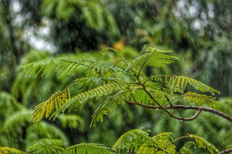 बरसात, वर्षा, कान्हा, मेघ, कृष्णा